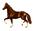 French Trotter ##STADE## - coat 16028
