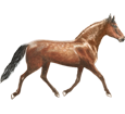 French Trotter breed horse for sale