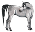 Arabian Horse ##STADE## - coat 1000000124
