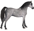 Arabian Horse ##STADE## - coat 52