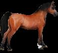 Arabian Horse ##STADE## - coat 79