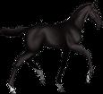 Holsteiner Foal - coat 51