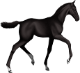 Holsteiner ##STADE## - coat 51