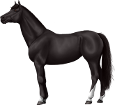 Holsteiner breed horse for sale