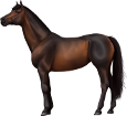 Holsteiner ##STADE## - coat 76