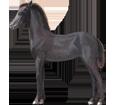 Friesian Horse Foal - coat 51