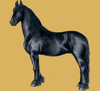 Take in a friesian horse breed horse