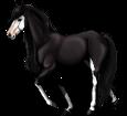 American Paint Horse ##STADE## - coat 1000000160