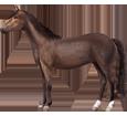 Hanoverian Horse ##STADE## - coat 51