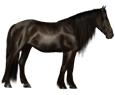 Mustang ##STADE## - coat 26