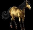 Marquesas horse ##STADE## - coat 20