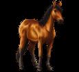 Danube Delta horse ##STADE## - coat 79