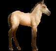 Connemara Pony breed horse for sale