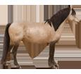 Connemara Pony ##STADE## - coat 20