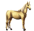 Boer Pony Adult - coat 1607