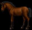 Thai pony ##STADE## - coat 76
