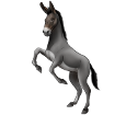 Donkey ##STADE## - coat 1000000166