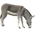 Donkey ##STADE## - coat 71